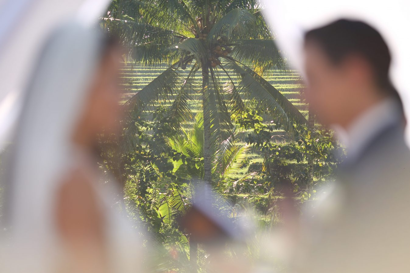blog bali bride ricefields