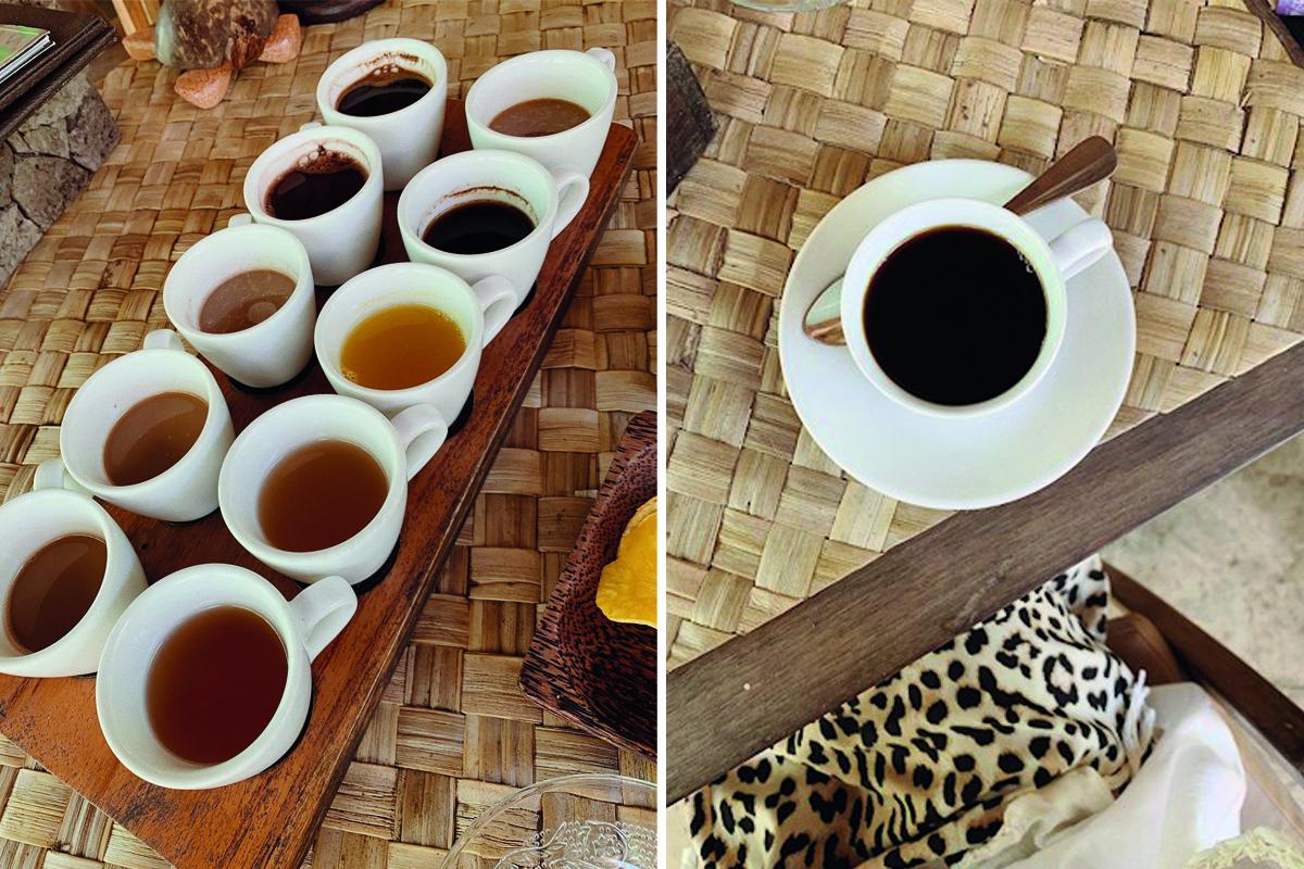 bali blog coffee plantation